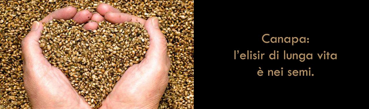 Canapa: l'elisir di lunga vita è nei semi