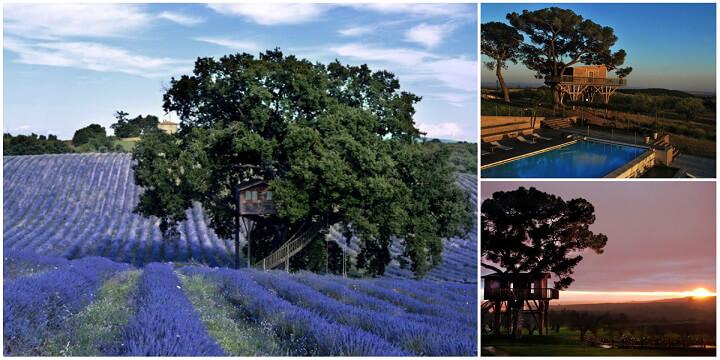 Il sogno diventa realtà: la suite sull'albero