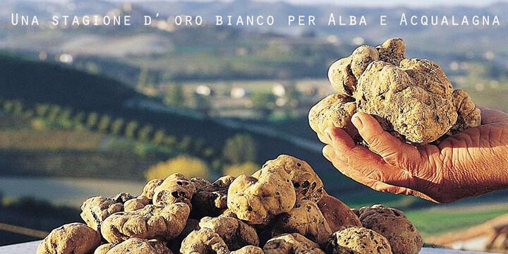 Una stagione d'oro bianco per Alba e Acqualagna