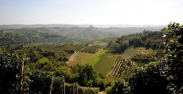 Langhe e Monferrato: i panorami del vino piemontese