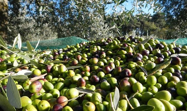 Olio extravergine di oliva: guida alla scelta