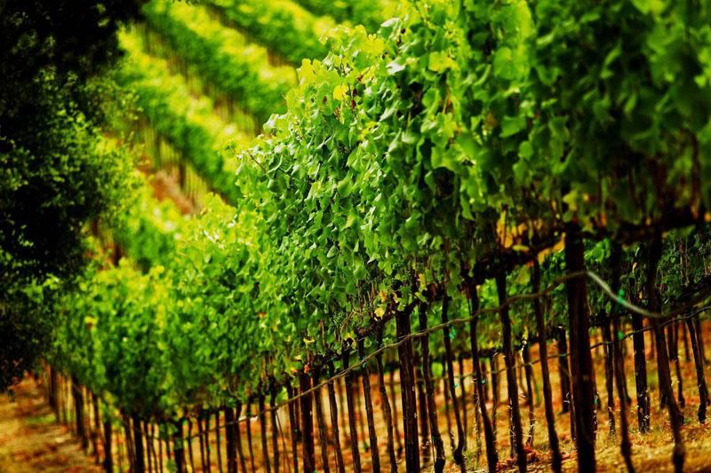 terroir vino e ambiente