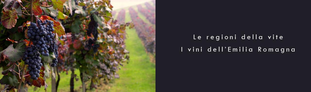 Le regioni della vite: i vini dell'Emilia Romagna