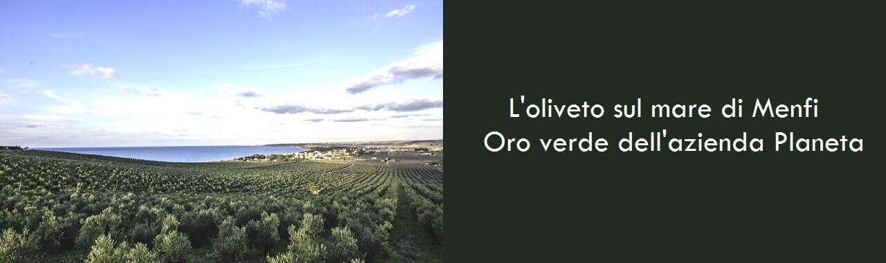L'oliveto sul mare di Menfi: oro verde dell'azienda Planeta