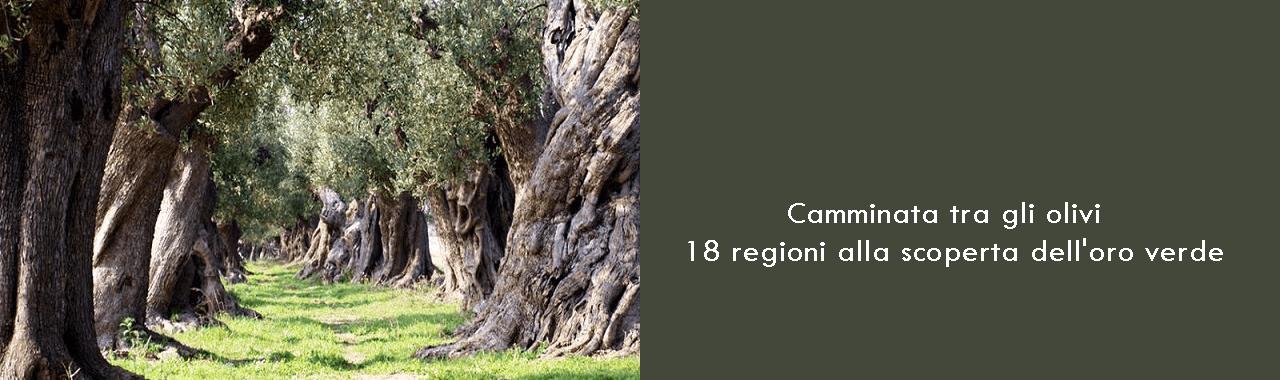 Camminata tra gli olivi: 18 regioni alla scoperta dell'oro verde