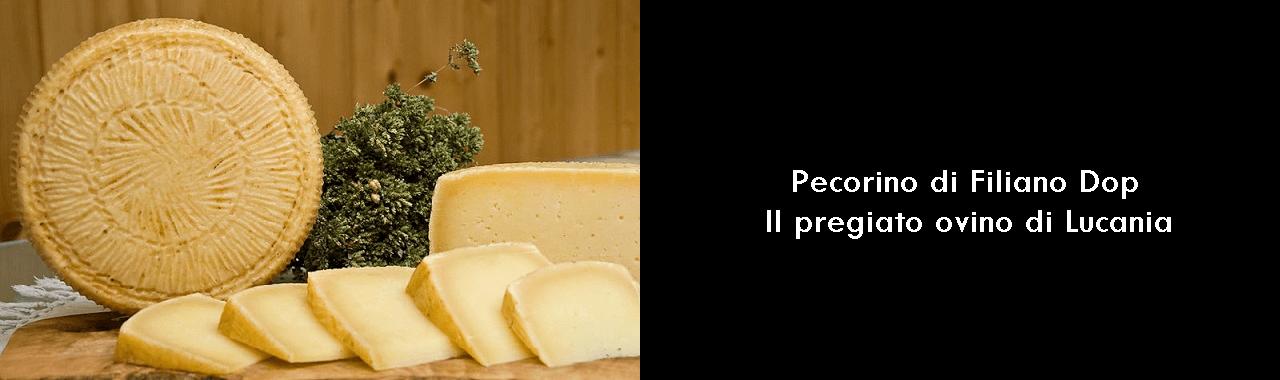 Pecorino di Filiano Dop: il pregiato ovino di Lucania