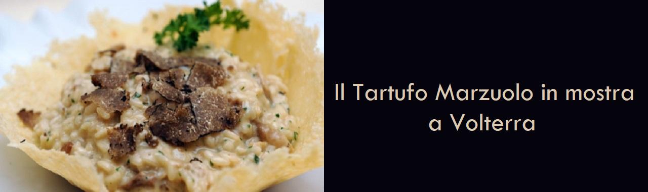Il Tartufo Marzuolo in mostra a Volterra
