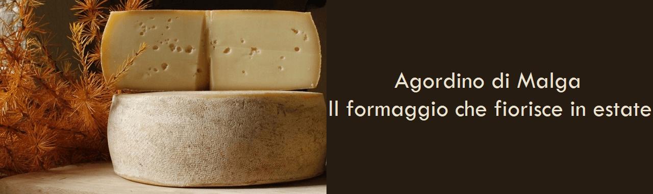 Agordino di Malga: il formaggio che fiorisce in estate