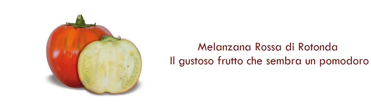 Melanzana Rossa di Rotonda: il gustoso frutto che sembra un pomodoro