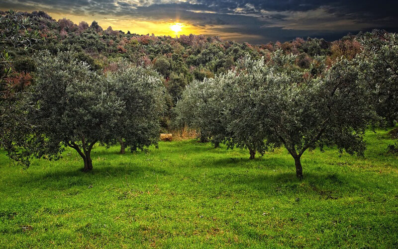 Camminata tra gli olivi 2018