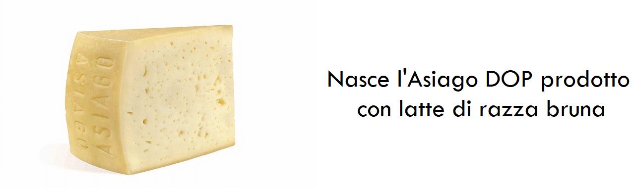 Nasce l'Asiago DOP prodotto con latte di razza bruna