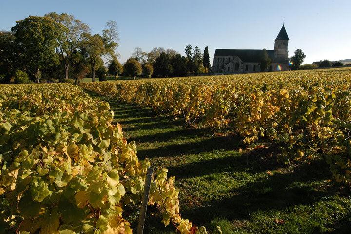 Le vigne di Clos Cazals