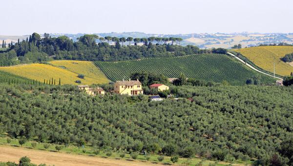 Marche:Azienda agricola Gabrielloni