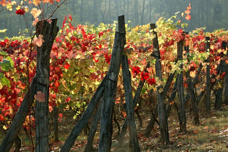 vini dell'emilia romagna