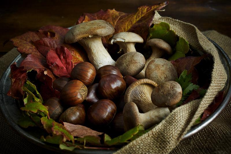 abbinamento funghi e vino