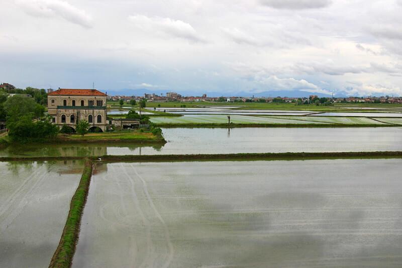 filiera europea del riso - risaie italiane