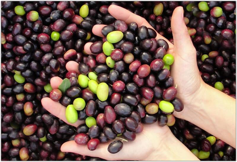 Armonia di olive