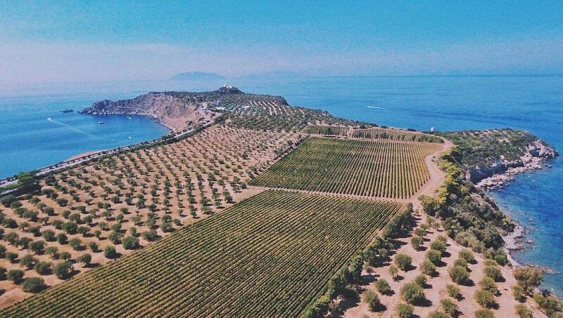 Vendemmia 2017 Sicilia Capo Milazzo