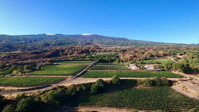Vendemmia 2017 Sicilia Etna